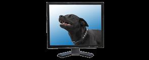Videoüberwachung-Monitore